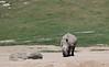 Rhinoceros (a.k.a. Chubby Unicorn)