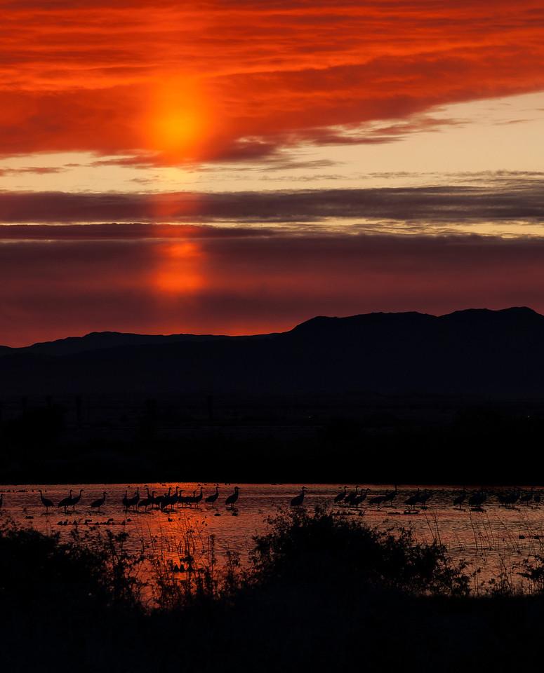 Sun pillar and Sandhill Cranes at sunset .