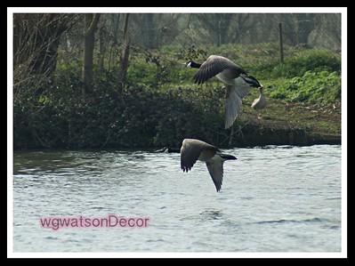 duck5