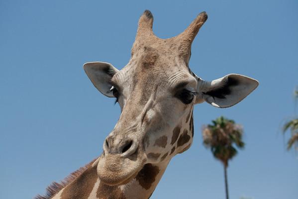 San Diego Wildlife Park