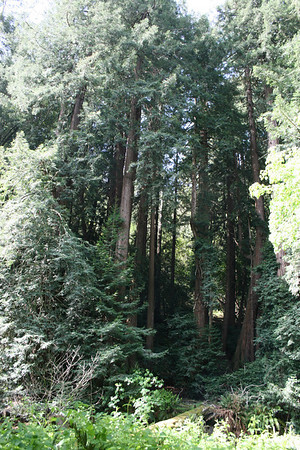 San Francisco - Muir Woods