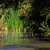 Fall in the Freshwater Wetlands Marsh