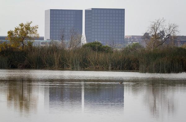 Winter at the San Joaquin Wildlife Sanctuary. January, 2014