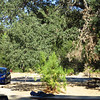 Our campsite at Pinnacles National Park