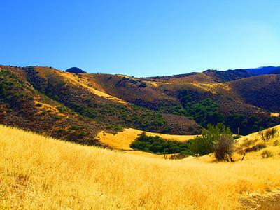 golden grasses (photoshopped)