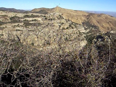 Here's a short video taken enroute to the Jackson Trail:  Lion Canyon, an historic spot because it was one of the first release sites of the reintroduction of the California Condor. Views also north into Cuyama Valley and San Luis Obispo County.