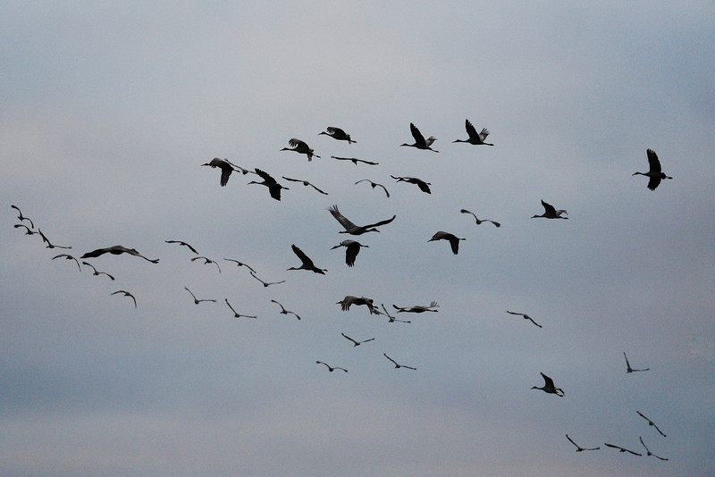 091204_fall_migration115