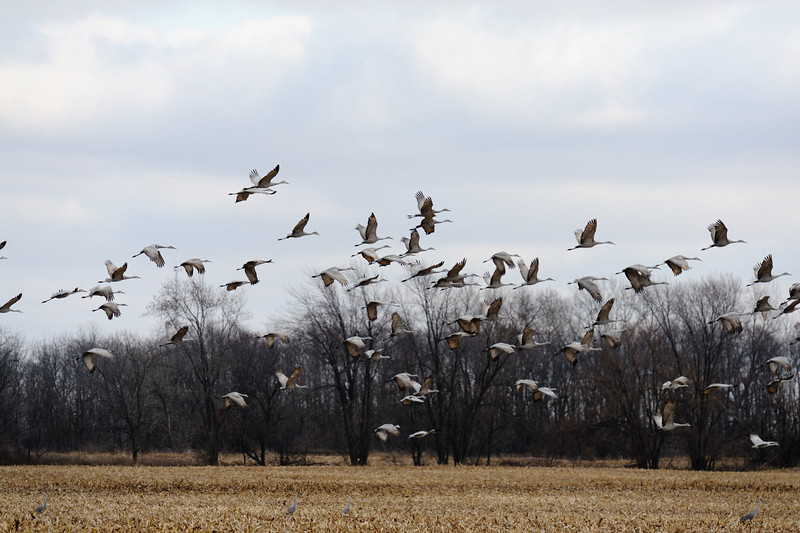 091204_fall_migration049