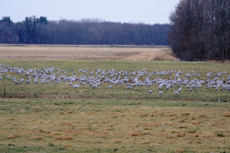 091204_fall_migration099