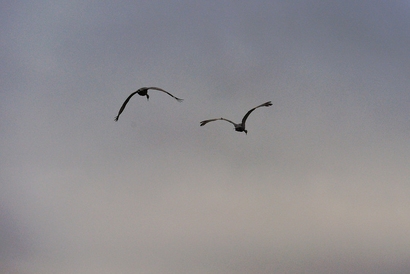 091204_fall_migration074