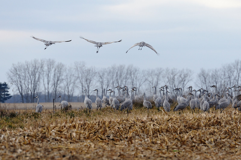 091204_fall_migration057