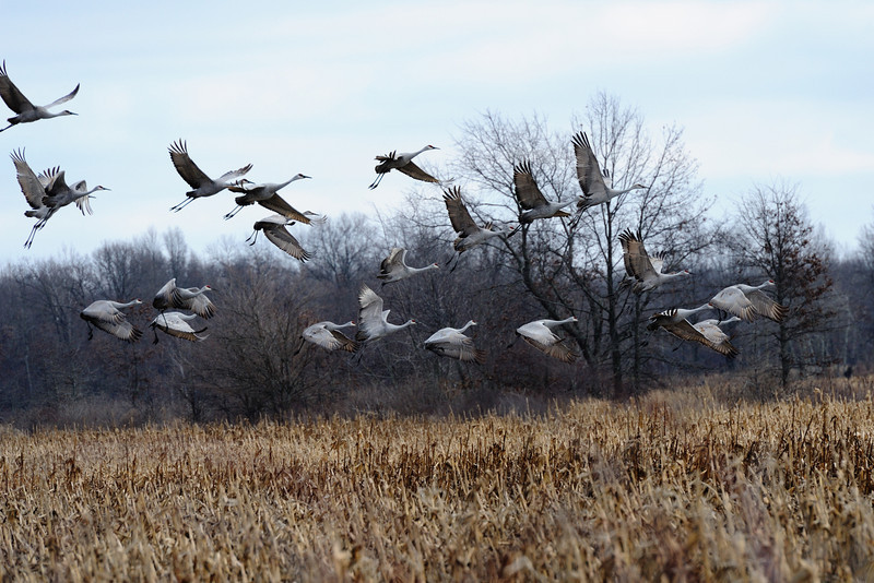 091204_fall_migration025