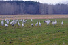 091204_fall_migration120