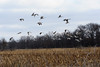 091204_fall_migration028