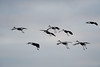 091204_fall_migration123