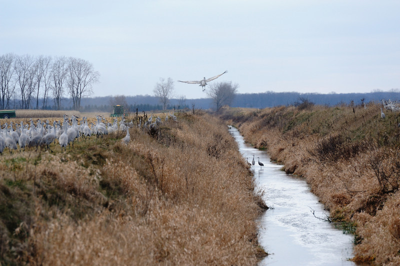 091204_fall_migration061