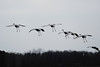 091204_fall_migration124