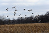 091204_fall_migration027