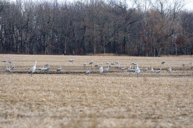091204_fall_migration042