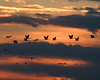 Sandhill Crane Migration : The largest gathering of cranes anywhere in the world happens in Nebraska every year!  Approximately 450,000 sandhill cranes (80% of world population) migrate through central Nebraska on their way to breeding grounds in Canada and Alaska.  Fossil records indicate that this has been happening for 9 million years.