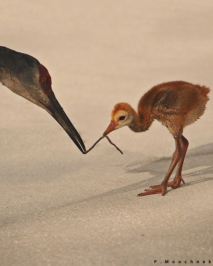 A Mother's Love Is Stronger Than An Earthworm !!