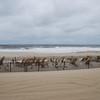 Sandy2 - 2012 001