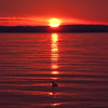 Sunset over Common Merganser on Raritan Bay