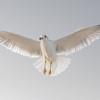 Winged Messenger