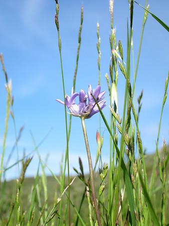 Santa Teresa Wildflowers April 16, 2011