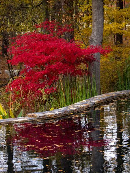 Sarah P Duke Gardens 12Nov12