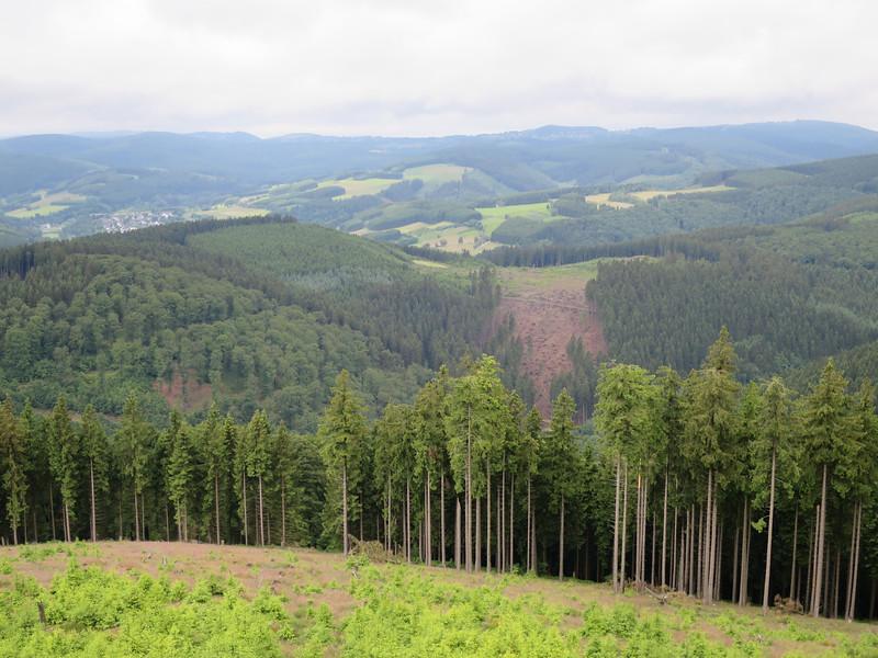 Productiebos bomen 3-100 jaar