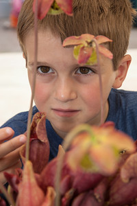 Andrew (age 5) from Logan OH examines a carniverous pitcher plant