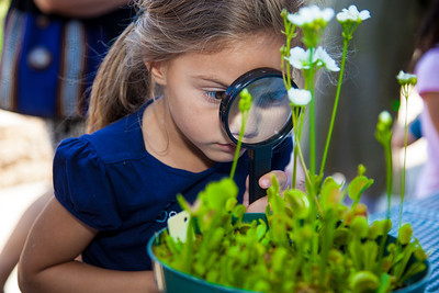 Kaylee (age 5) from North Carolina examines a Venus flytrap