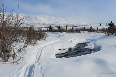 Savage River, Denali