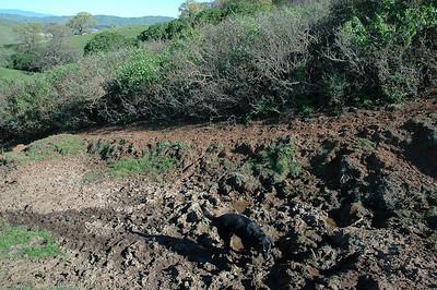 Save Mount Diablo's Mangini Ranch