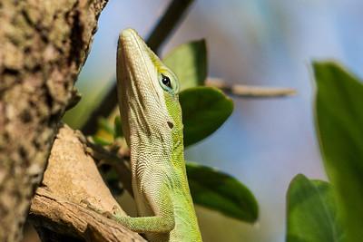 Color me Green - Louisiana