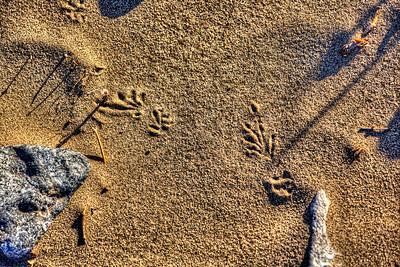 Lizard Tracks - Death Valley