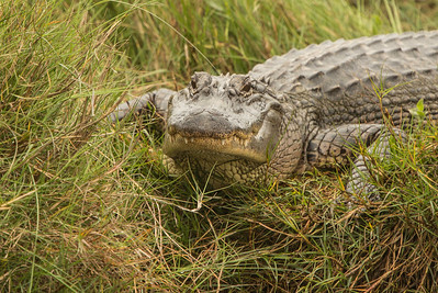 Ready for Action - Anahuac NWR