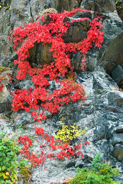 Detail of cliff face in Shenanndoah National Park with fall colors