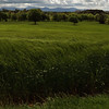 ashford grass