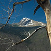 Heaven's Peak framed by the limbs of a dead tree -- Glacier National Park