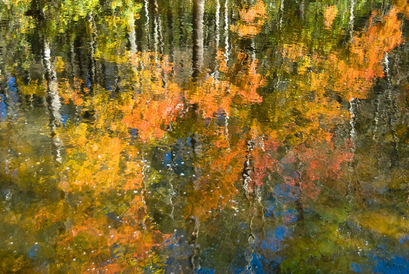 Reflection of fall foliage in a stream off of the Blue Ridge Parkway near Blowing Rock, North Carolina