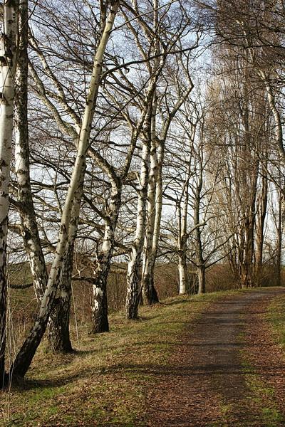 Winter walk at Richmond Dyke.