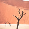 "<em><b><center> Dead Vlei - Sossusvlei.<br><center> The mud from the river stacks up at Sossusvlei and after some 1000 years the river searches its way through the next row of dunes. This is how the place called Dead Vlei was created, here the river used to drain away many years ago. Because of the lack of water all the trees in this valley have died, so the meaning of ""Dead Vlei"" becomes clear. What makes the sight of the Dead Vlei so remarkable is that there is not even moisture enough for normal decomposition to occur. So all the trees here, though dead, have been nearly perfectly preserved for centuries."