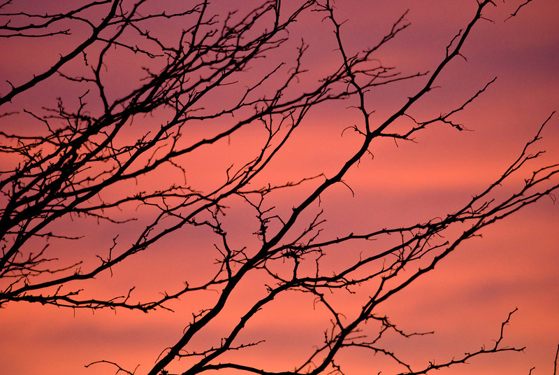 Bare tree branches siloutted against a pink and purple sunset
