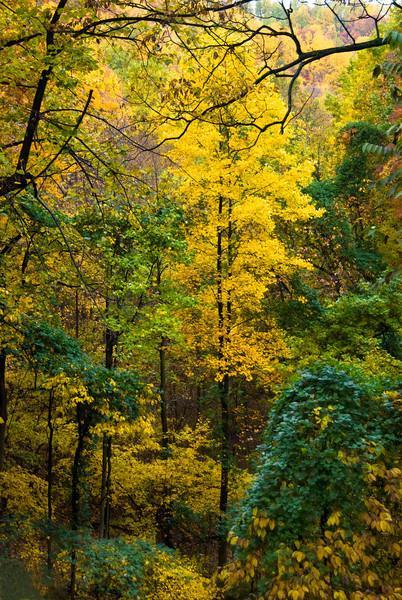 Brent's Gap, Horseshoe Mountain, Nelson County, Virginia