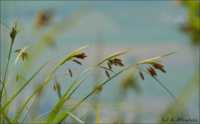 Grass - upper Bridal