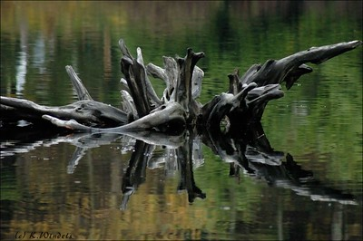Tree Root, Ruby Lake