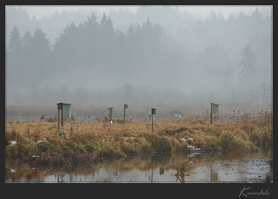 A cold winter day at Burnaby Lake