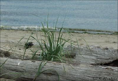 Grass at Jerico Beach Park